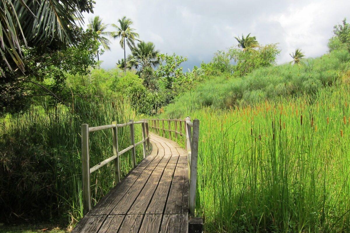Gleitschirmreise La Reunion Urwald